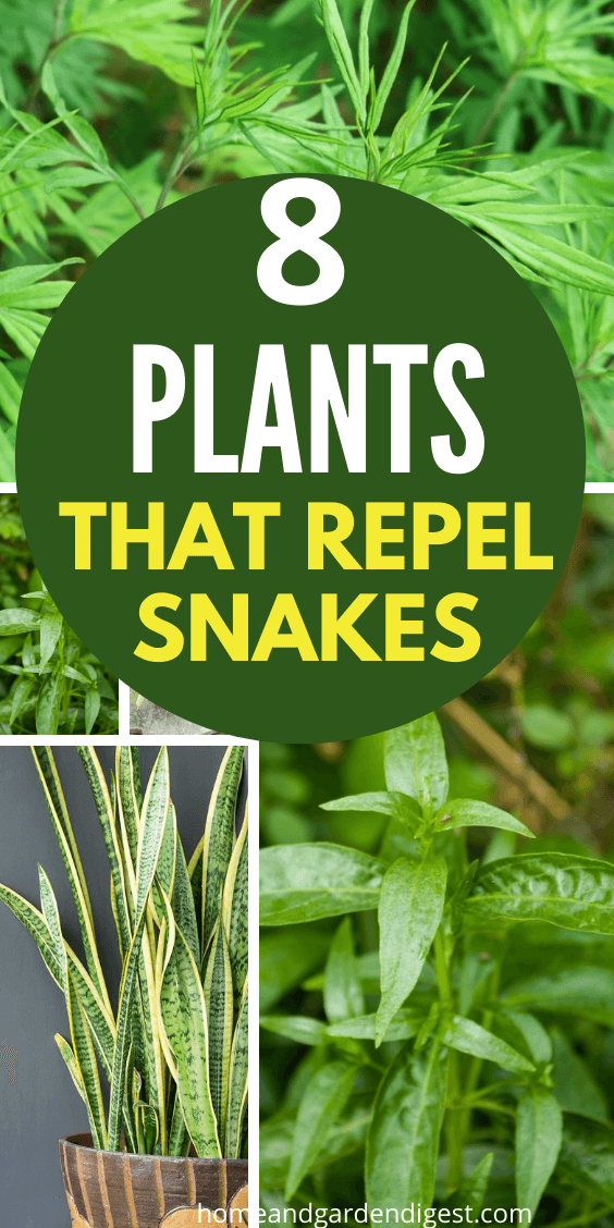 Top 8 Plants That Repel Snakes Natural Snake Repellent Hdg Snake Repellant Snake Repellant Plants Plants