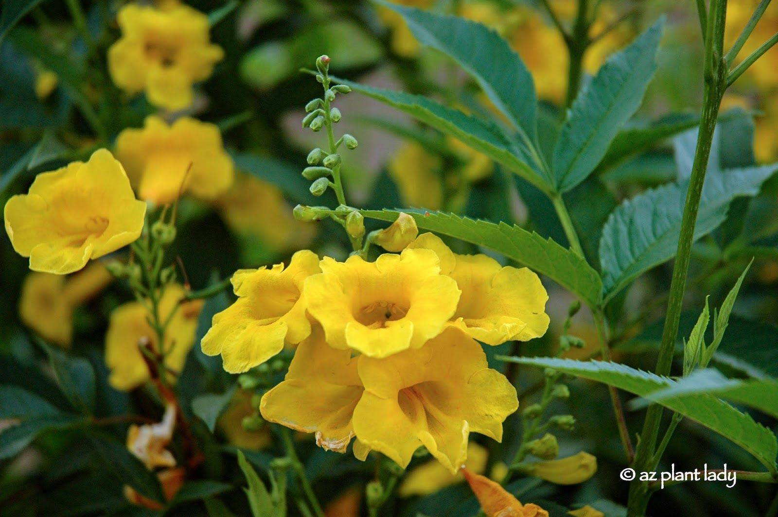 All about yellow flowers for your garden put a smile on