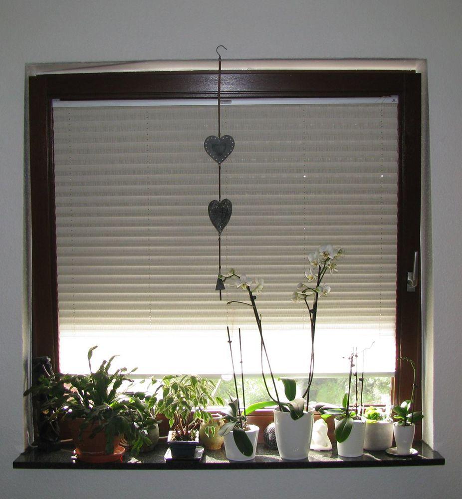 Sensuna Sichtschutz Plissee Am Wohnzimmer Fenster Sensuna