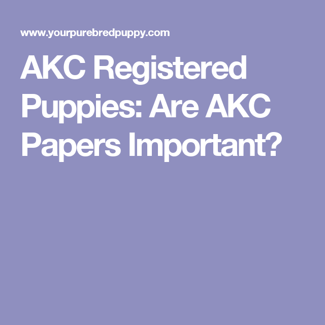 AKC Registered Puppies: Are AKC Papers Important? | Dog Stuff