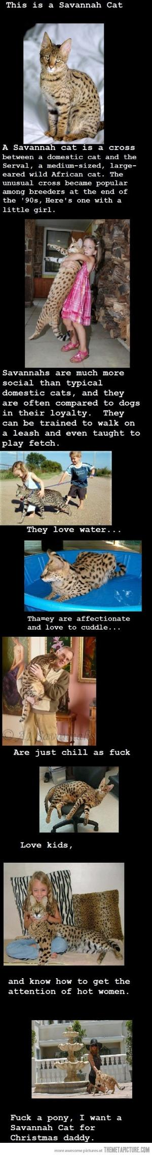 I want a Savannah cat and I want it now… by Nina Maltese