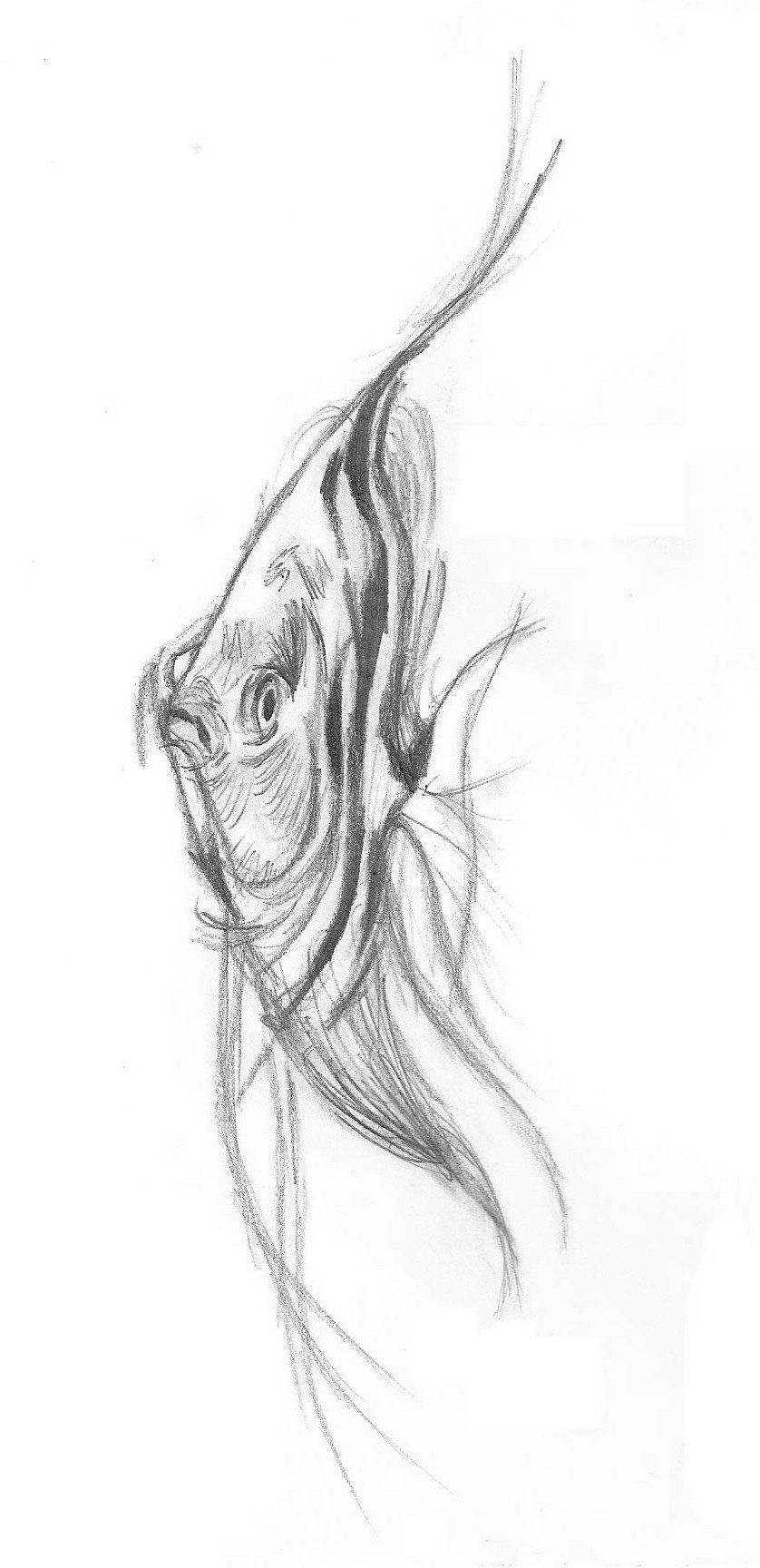 Image Result For Tropical Fish Drawings Watercolor Fish Fish Drawings Fish Tank Drawing