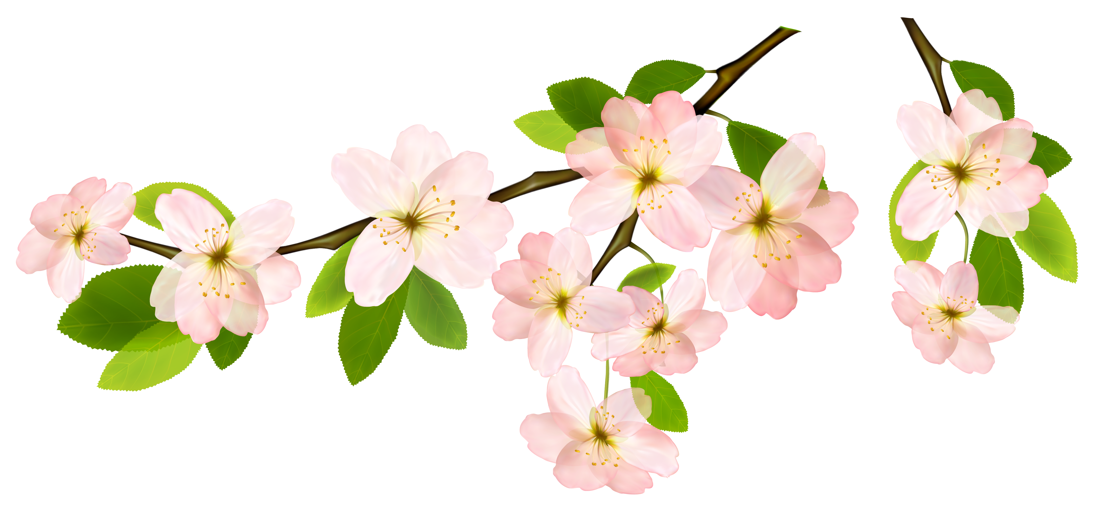 Spring Branch PNG Clipart Picture