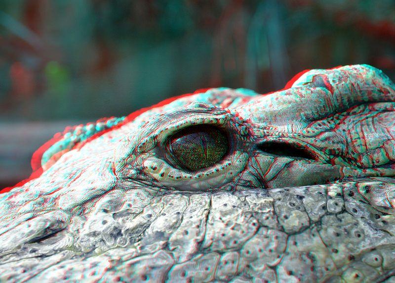 Eye of a Croc 3D