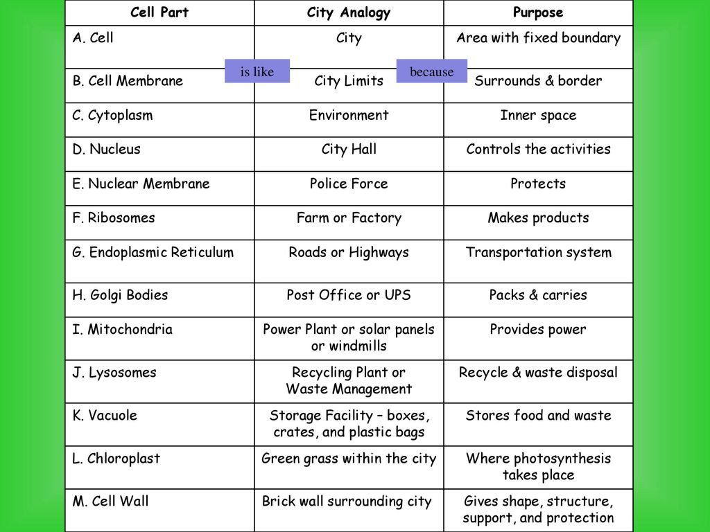 Cell Cityogy Worksheet Parts Of A Cell Ppt In