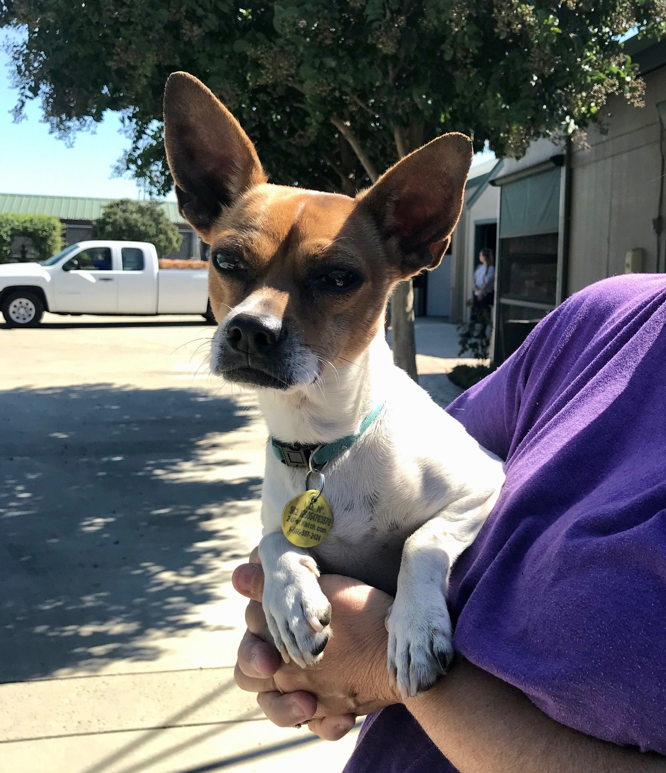Adopt Contact Patricia 209 676 0637 For Spencer On Petfinder