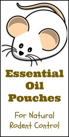 Natural essential oils were one of the non-toxic methods of rodent control after we realized we had a mouse problem in our house.