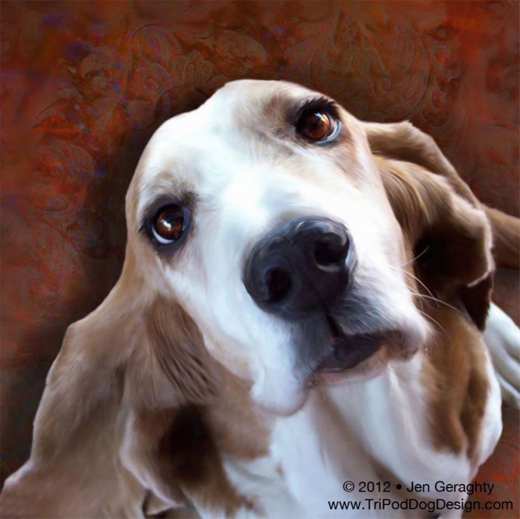 Howie The Basset Hound. RIP Sweet Howie.