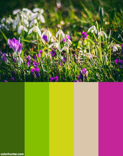 Snowdrops And Crocuses Color Scheme From Colorhunter Com Color Color Schemes Color Palette