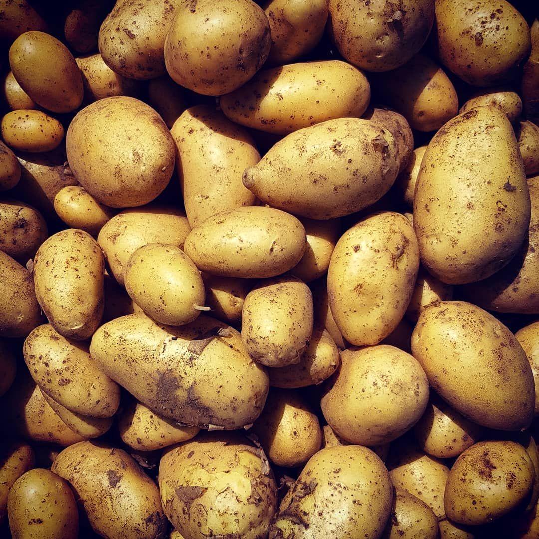 Les Pommes De Terre Primeur Sont La L Artisanale De Glabais Cultivee Sous Un Lit De Foin Pour Un Gout Exquis Legumes Ferme Bio Maraichage Farm Organi