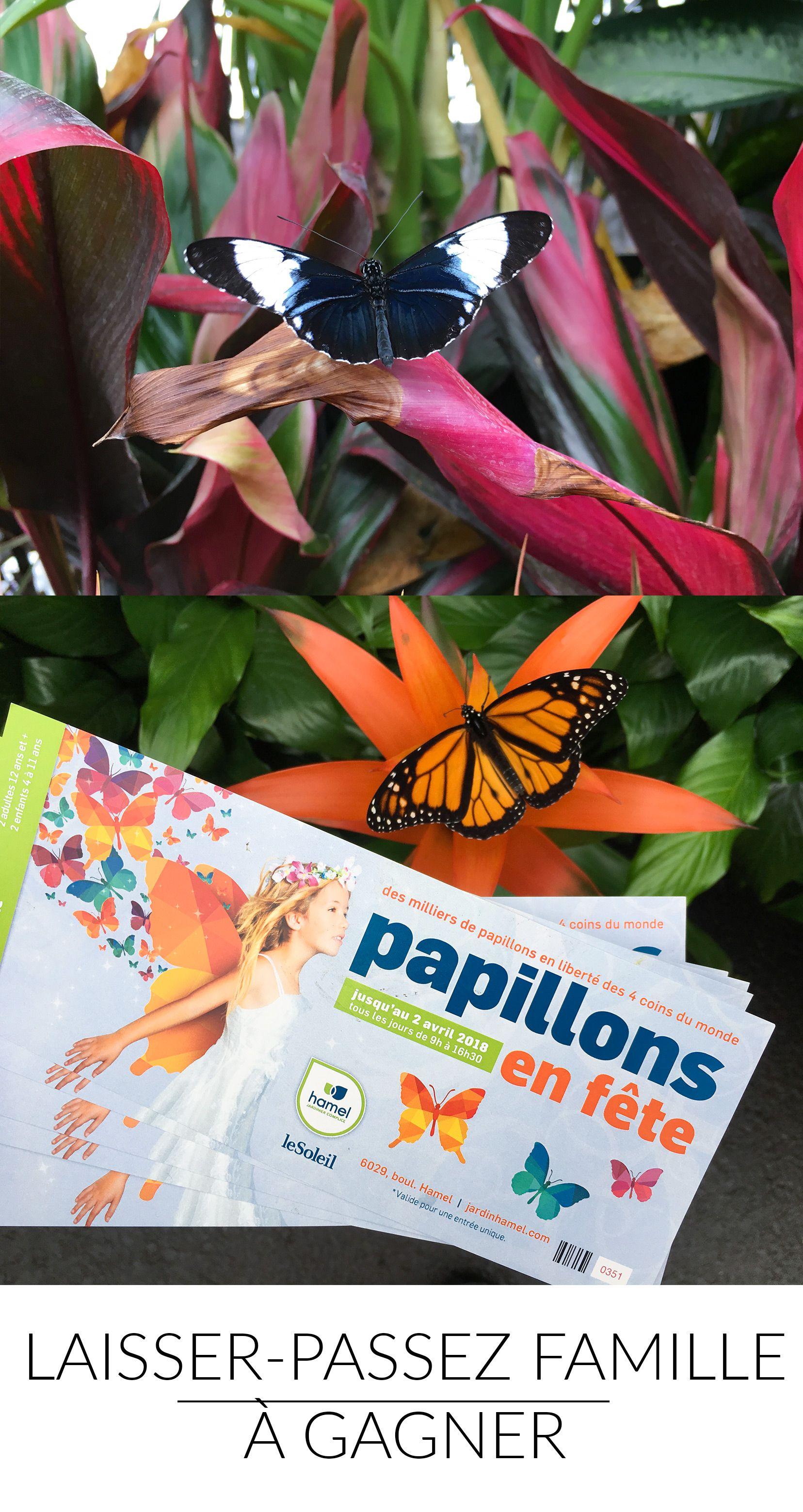 Gagne Ton Laisser Passez Famille Pour Papillons En Fete Chez Jardin