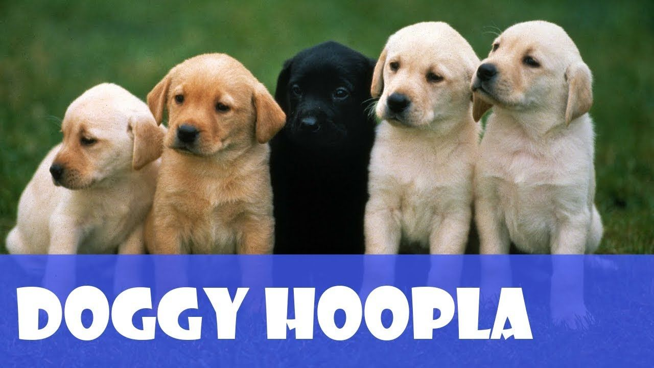 Doggy Hoopla S Funny Dogs Playing Funny Games One With Images