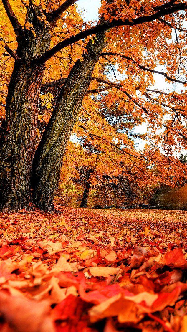 Whatsapp Duvar Kağıtları! Cep Telefonunuzun Çehresini Değiştirecek, Birbirinden Güzel 111 Arka Plan Önerisi #autumncolors