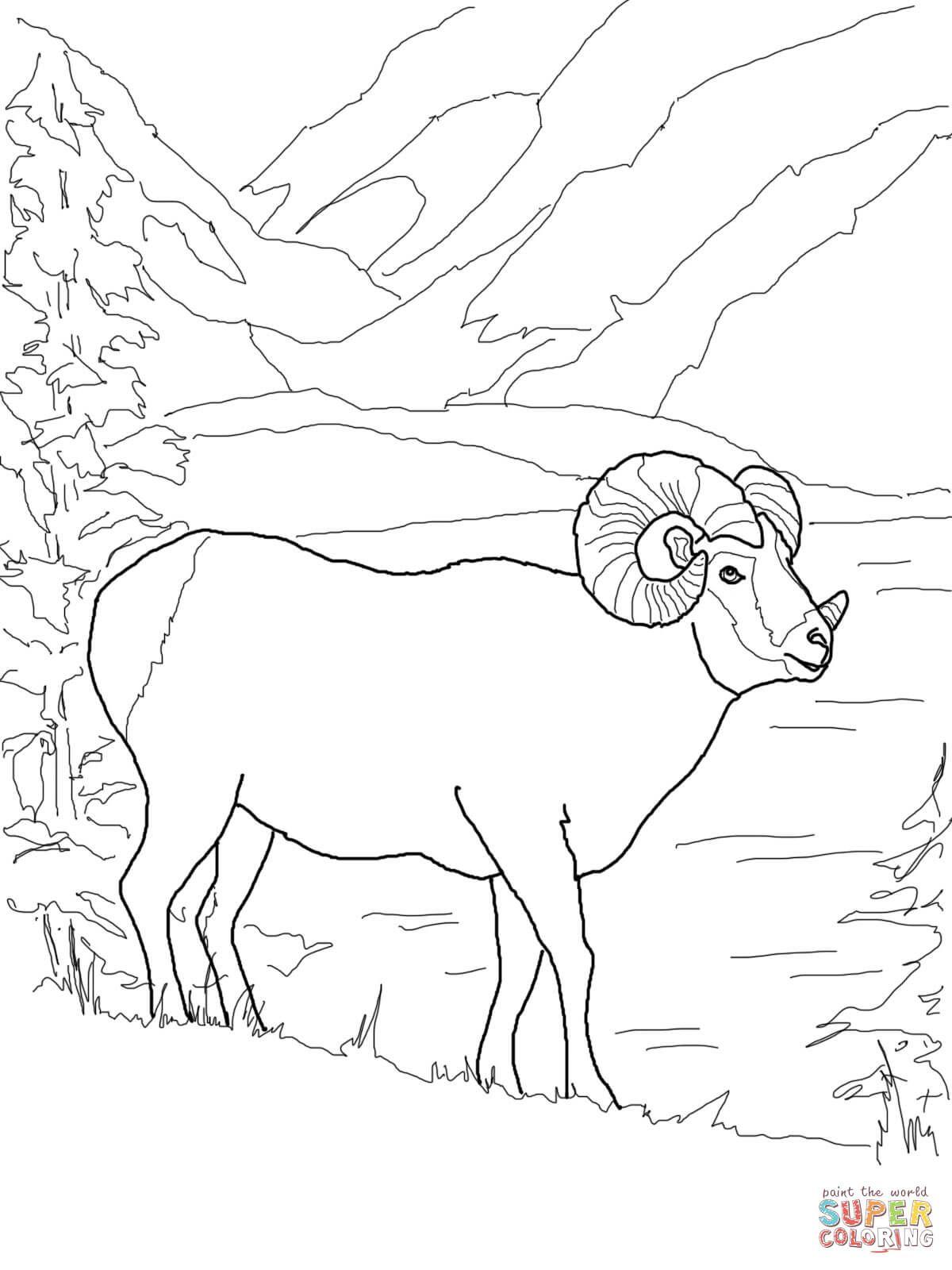 Argali Mountain Sheep Coloring Page