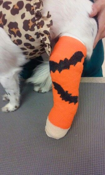 San Francisco Spca Veterinary Hospital Dog Daycare Vet Assistant Guide Dog
