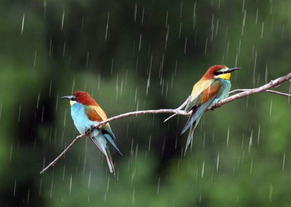Rain Freedom Summer Ready To Fly Around In The Forest Most Beautiful Birds