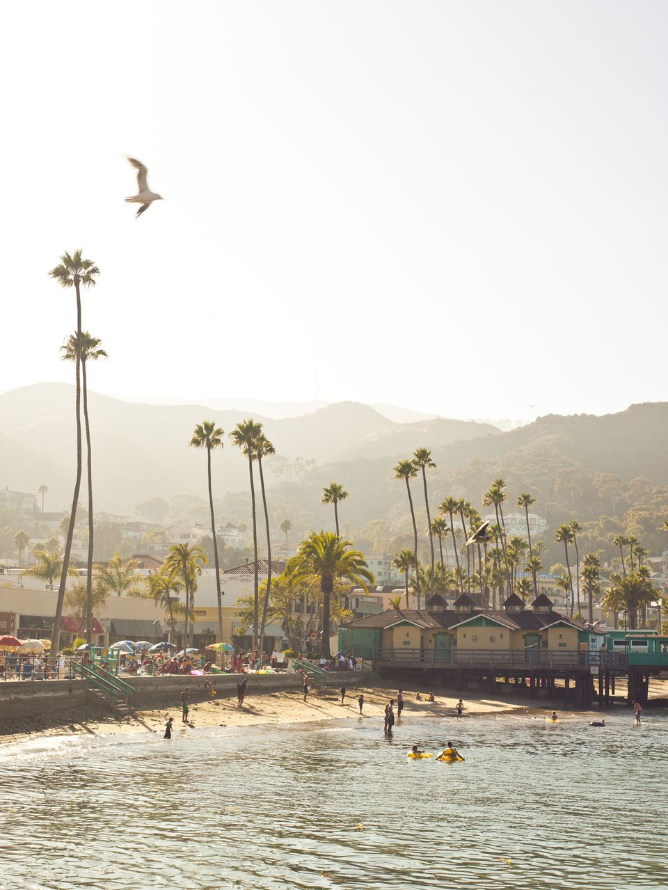 13 Fun Things To Do With Kids On Catalina Island Catalina Island Catalina Places To Go