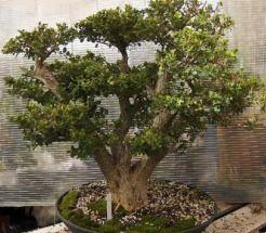 938ebb7853d28a459fa2b0aec1998df7 - Pepper Tree Gardens El Cajon Ca