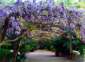 Diseñar un jardín mediterráneo – Parte IV