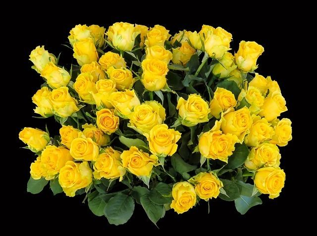 Yellow Roses What Does Yellow Color Mean In Rosesrosesopenweekend