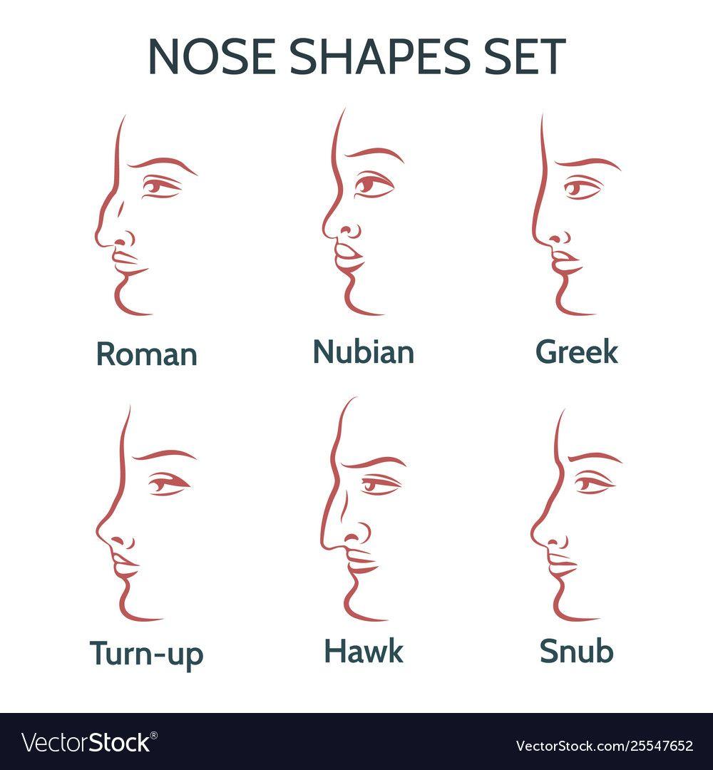 Contour nose shapes set Royalty Free Vector Image , # ...