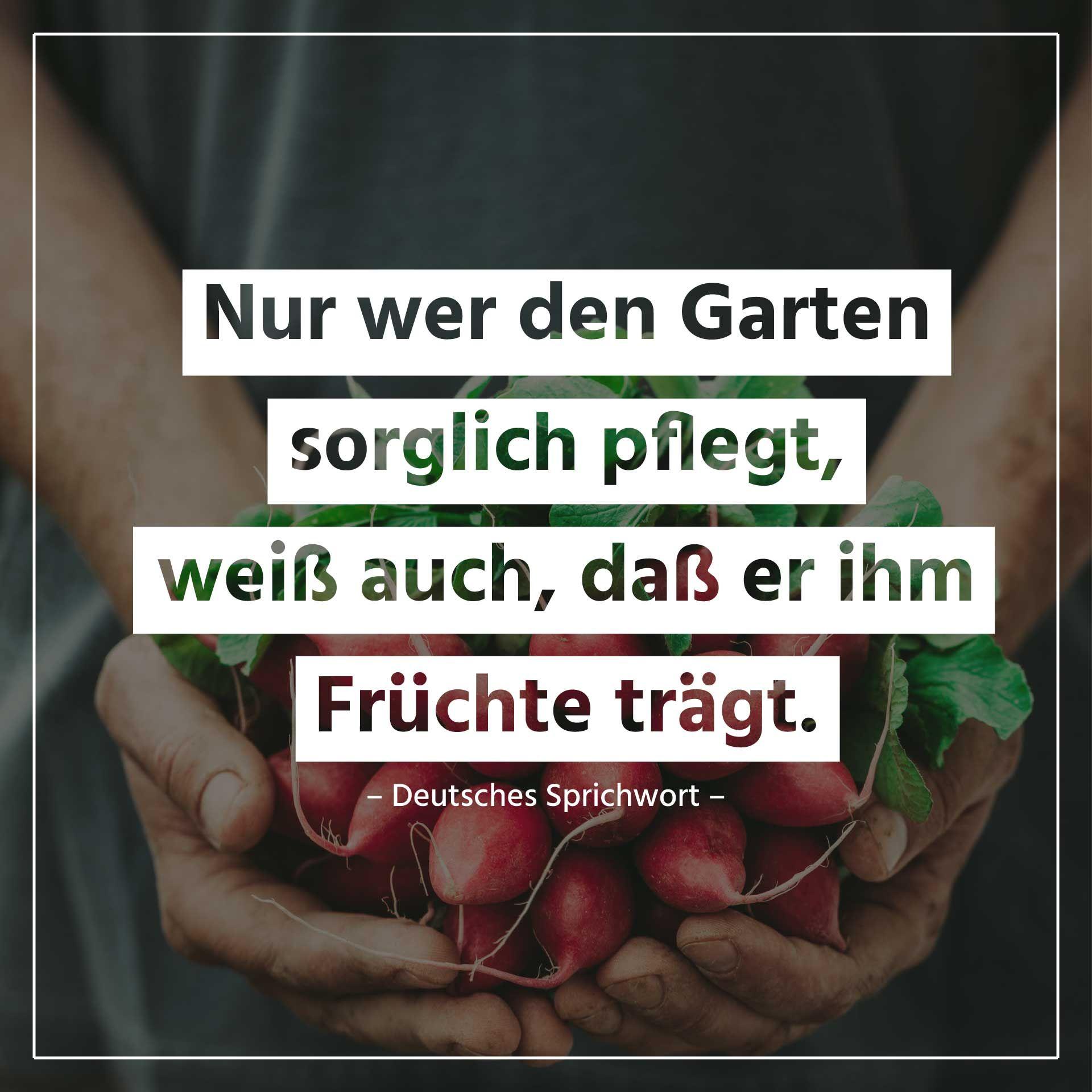 Lebensweisheiten Zum Thema Garten Und Noch Weiter Gute Weitere Spruche Und Zitate Spruche Zitate Zitate Deutsches Sprichwort