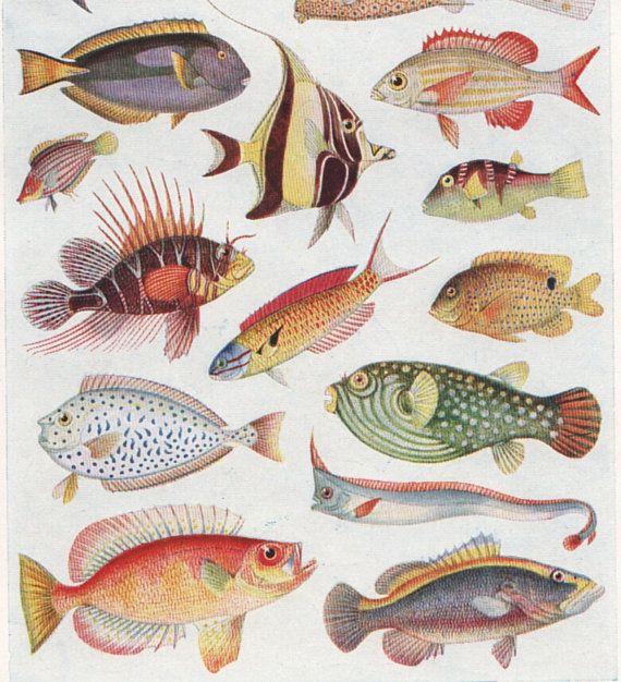 vintage Tropical fish print colorful ocean by ...