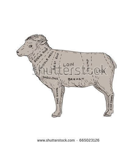 Illustration of a Vintage Lamb Meat Cut Map done in hand sketch Drawing style.  #meatcutmap #sketch #illustration