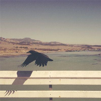 Bird paints wing shadow near Big Sur