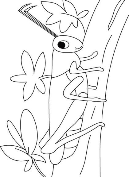 Grasshopper On A Walk Coloring Pages Download Free Grasshopper