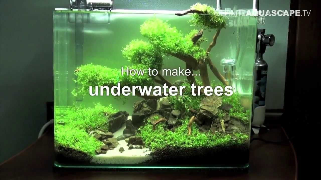 Aquascaping Video On How To Make Trees In Planted Aquarium Using Hemianthus Aka Dwarf Baby Tears Wired Onto Driftwood Planted Aquarium Aquarium Aquascape