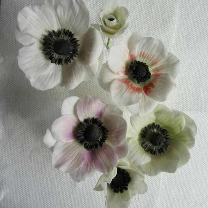 Sugarflowers, anemone, sugar anemone