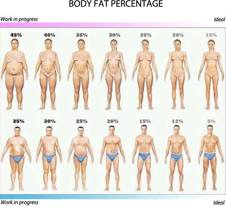 This Is A Chart Of What The Ideal Amount Of Body Fat Looks Like This Does Not Include Muscle Mjust The Body Fat So A Person Would Probably Look A