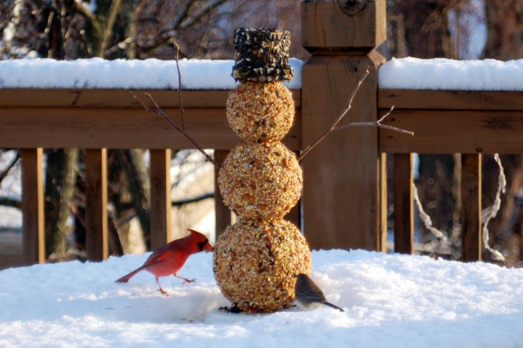 Bird seed snowman great kids craft my mom would love to receive bird seed snowman great kids craft my mom would love to receive this one solutioingenieria Image collections