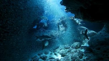 BBC - Earth - Awe-inspiring images capture life in the Atlantic Ocean