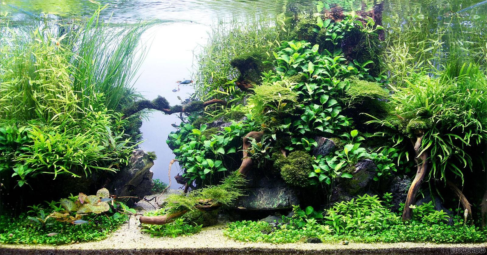 Nice use of anubias & negative space | Pflanzen aquarium ...