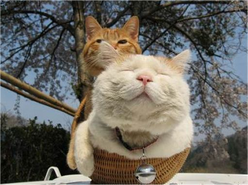 Two basket cats!