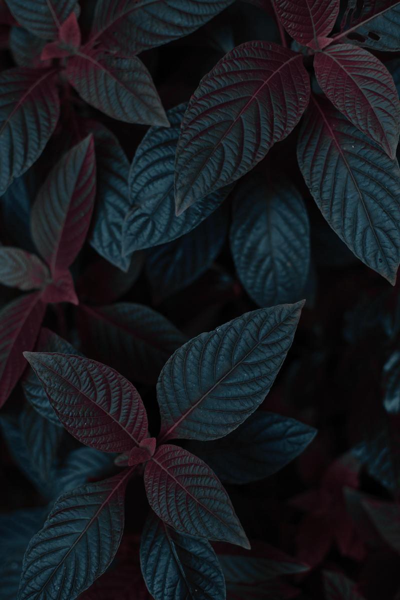 Wallpaper Day Leaves Dark Plant Stem For Hd 4k Wallpaperday For Desktop Mobile Phone Plant Wallpaper Abstract Wallpaper Backgrounds Hd Nature Wallpapers Aesthetic dark leaf wallpaper