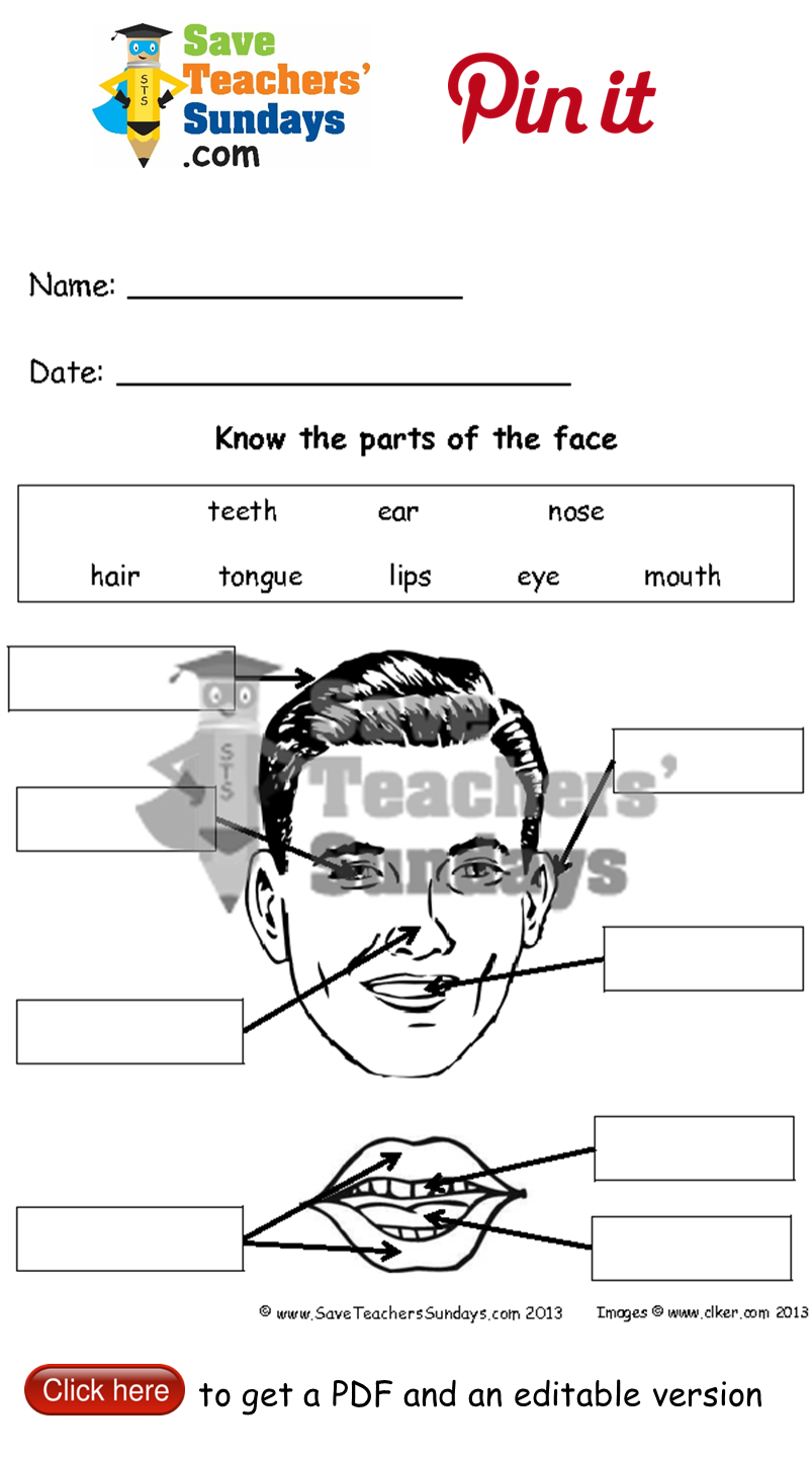 Parts of the human face - diagrams to label 2 levels of ...