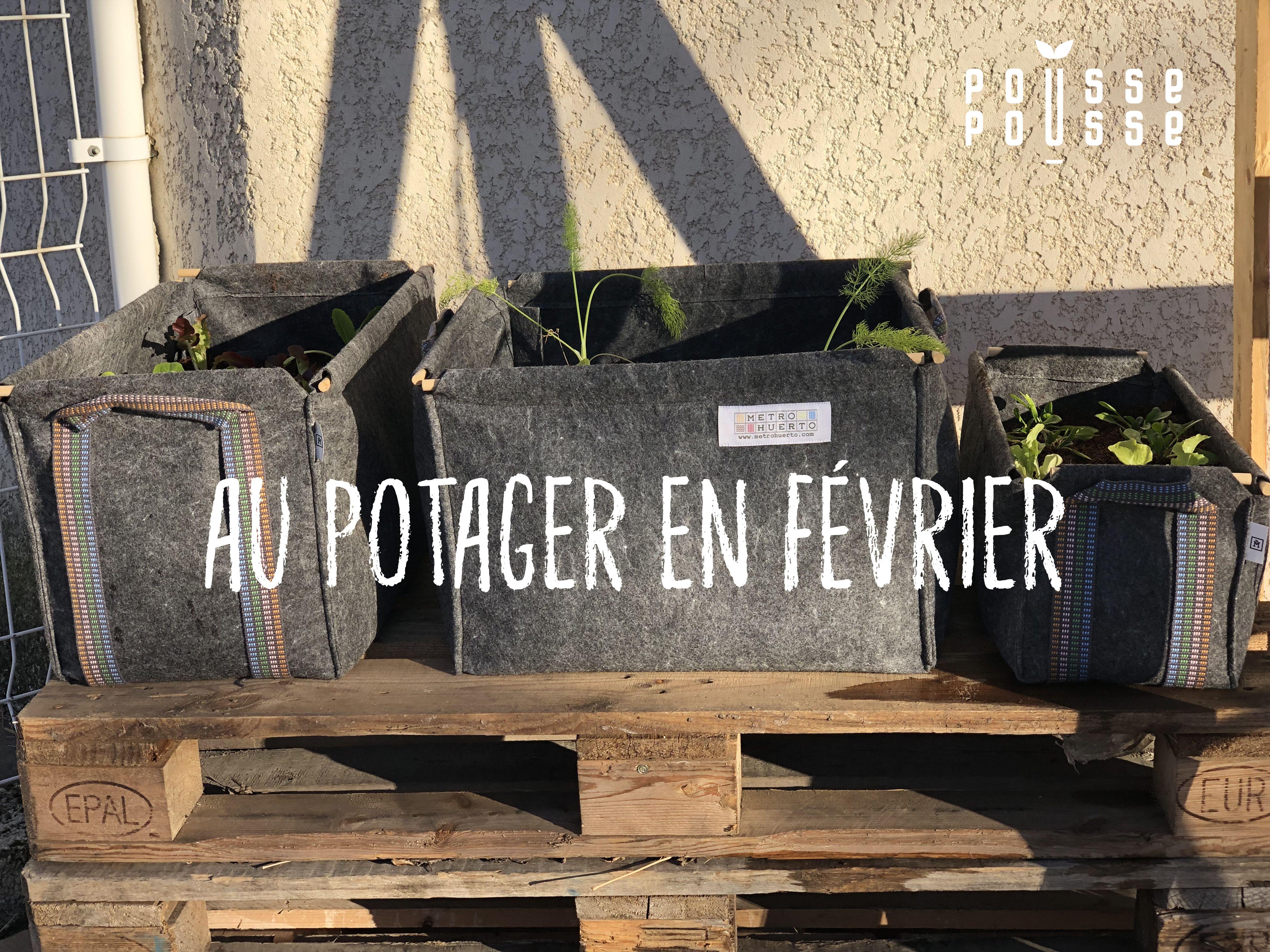 Que Faire Dans Le Potager En Fevrier que faire au jardin en fevrier ? | jardins, semis tomates et