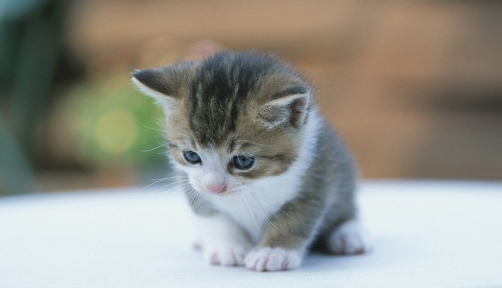 Más de 1000 imágenes sobre Gatitos/Cats en Pinterest