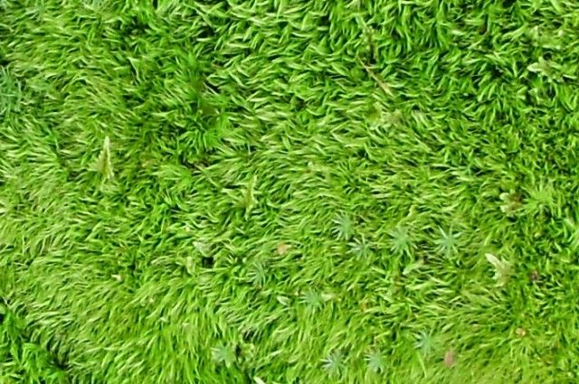 How to moss shower mat i fucking love science home for Natural moss bath mat