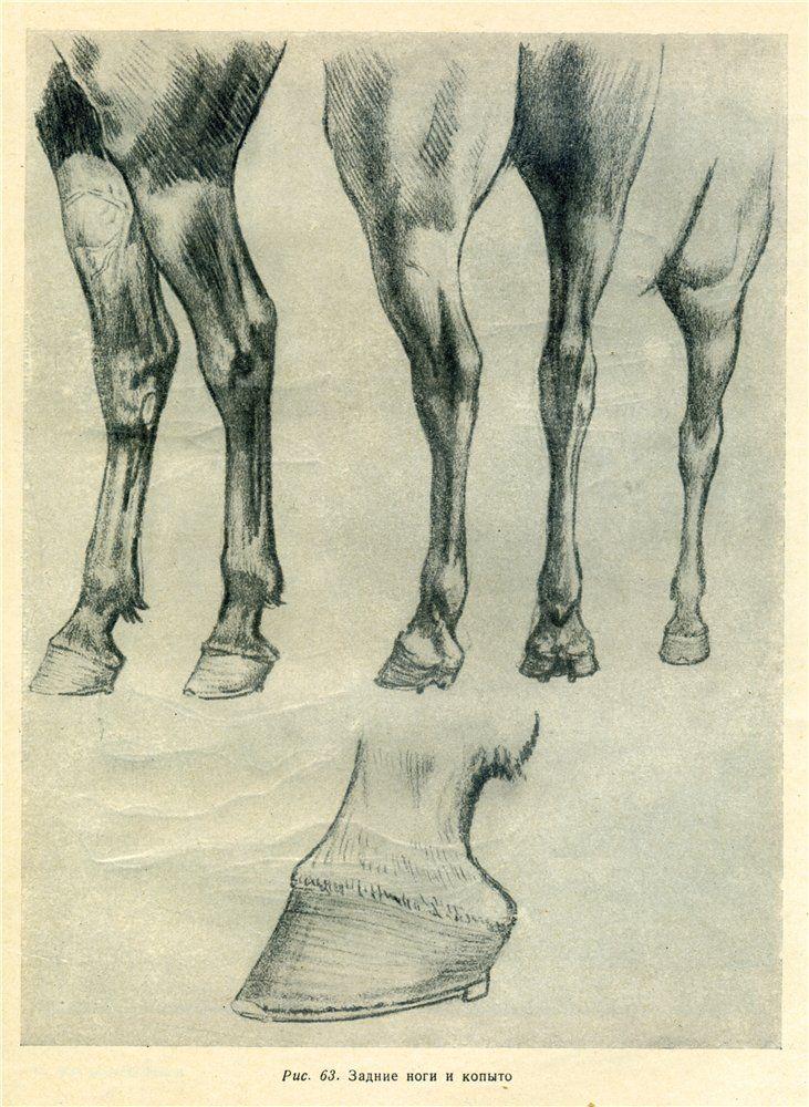 Как рисовать лошадь...   horse graphite ideas   Pinterest   Horse ...