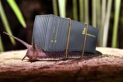 Mulch Gegen Schnecken Hier Der Mulch Praxistest Tipps Tricks Schnecken Schnecken Im Garten Nacktschnecken