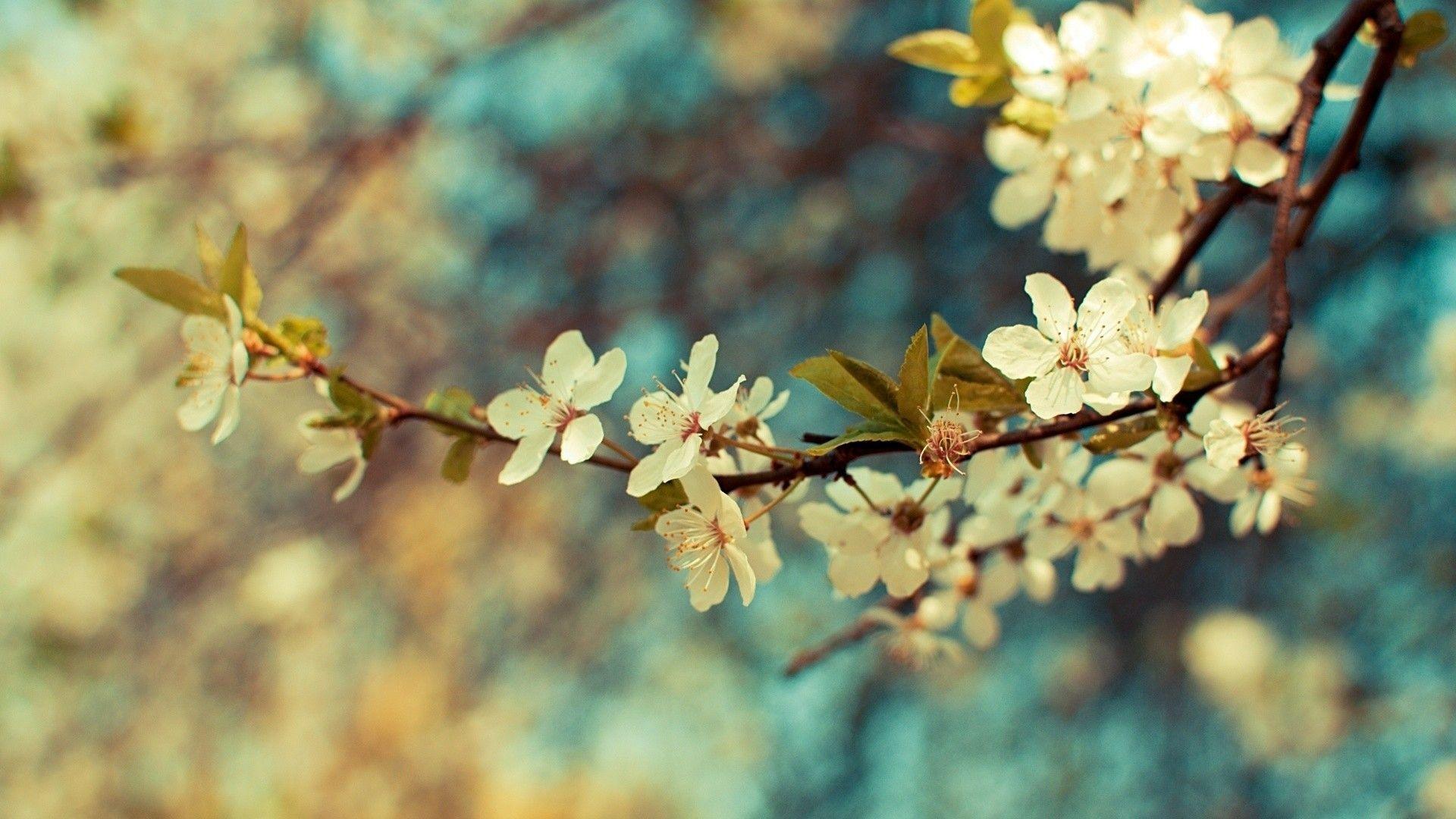 Diverse Vintage Flower Backgrounds Vintage Flowers Wallpaper