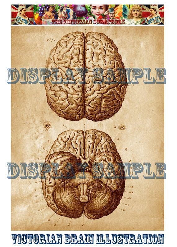 Victorian Medical Illustration - Human Brain - A4 Digital ...