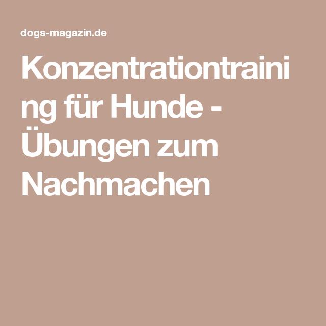 Konzentrationtraining für Hunde - Übungen zum Nachmachen