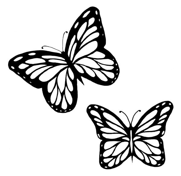 Butterfly Template  Butterflies    Butterfly Template