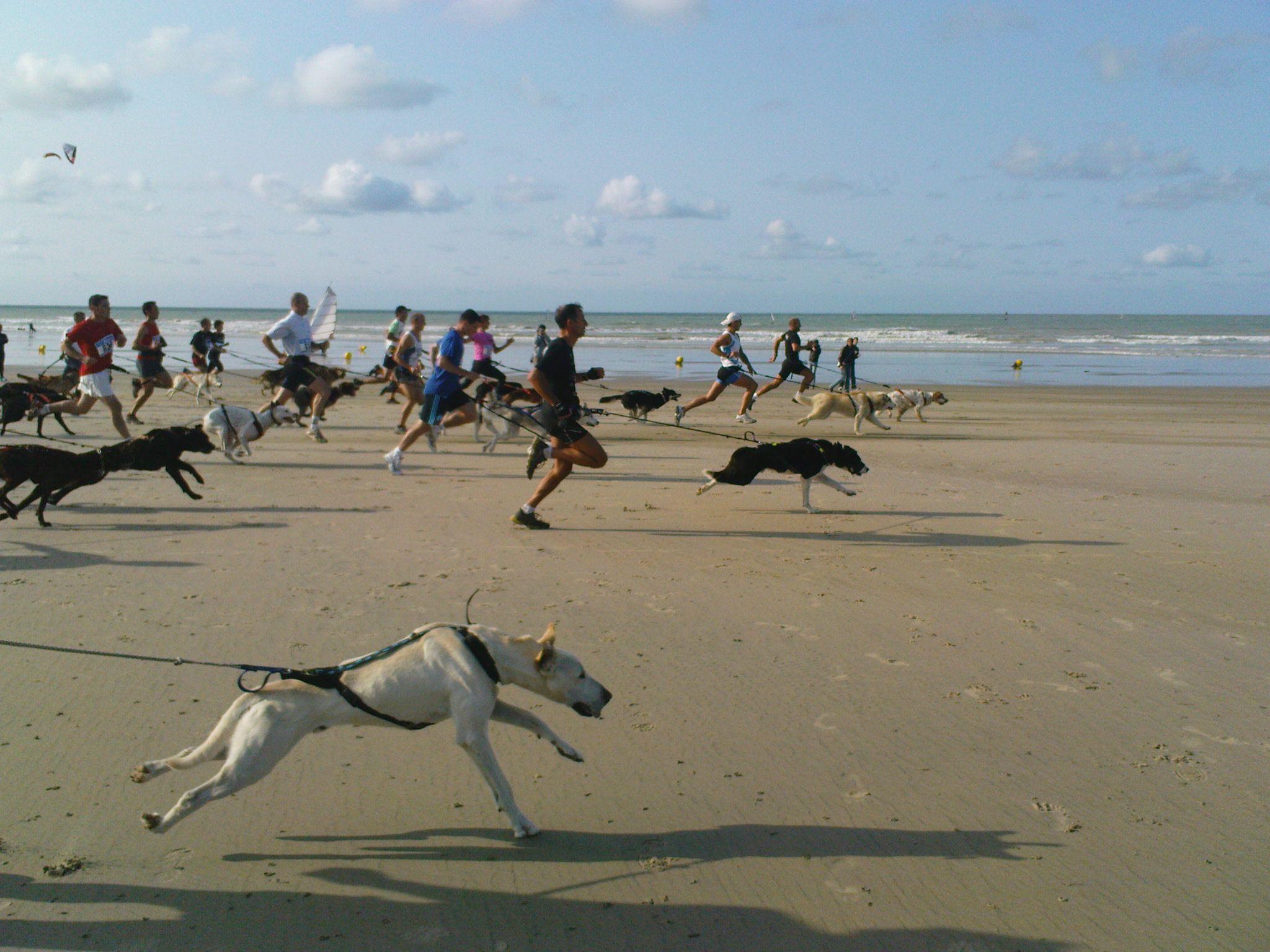 """Einmal im Jahr gibt es ein etwas ungewöhnliches Sportspektakel: das """"CaniCross""""! Ein 20km Rennen entlang des Strandes und hinauf auf die Kreidefelsen, bei denen jeweils ein Hund sein Herrchen zieht - über einen Bauchgurt verbunden. Es gibt auch eine Mountainbike-Variante. Wirklich beeindruckend!    http://www.maisonbeaurevoir.eu/d/wassersport_in_der_normandie.htm"""