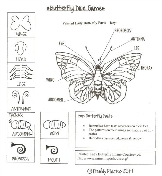 Butterfly Body Parts : Parts of a butterfly printable dice game facts